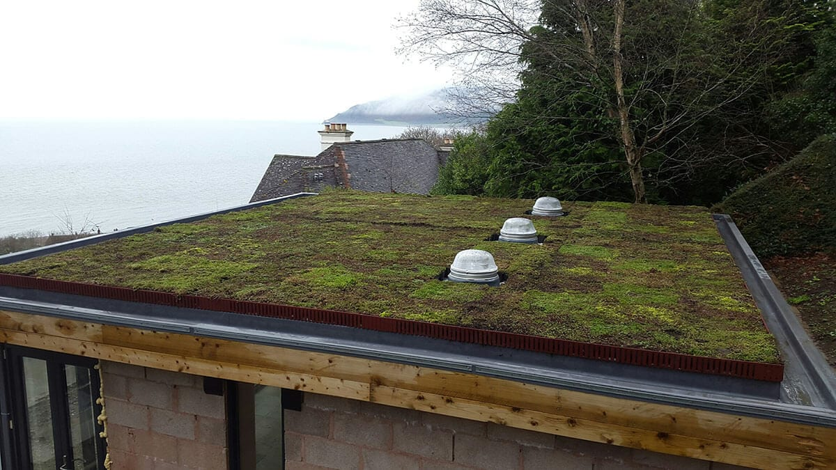 Grasses Green Roof